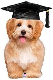 Kleiner Hund mit Doktorhut - Ballon für bestandene Prüfung, Abschluss, Bachelor, Master,... - Folienballon
